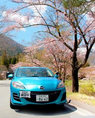 桜並木と教習車両